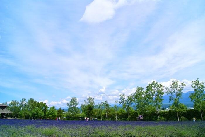 Furano travel guide, furano, hokkaido, flowers, lavender
