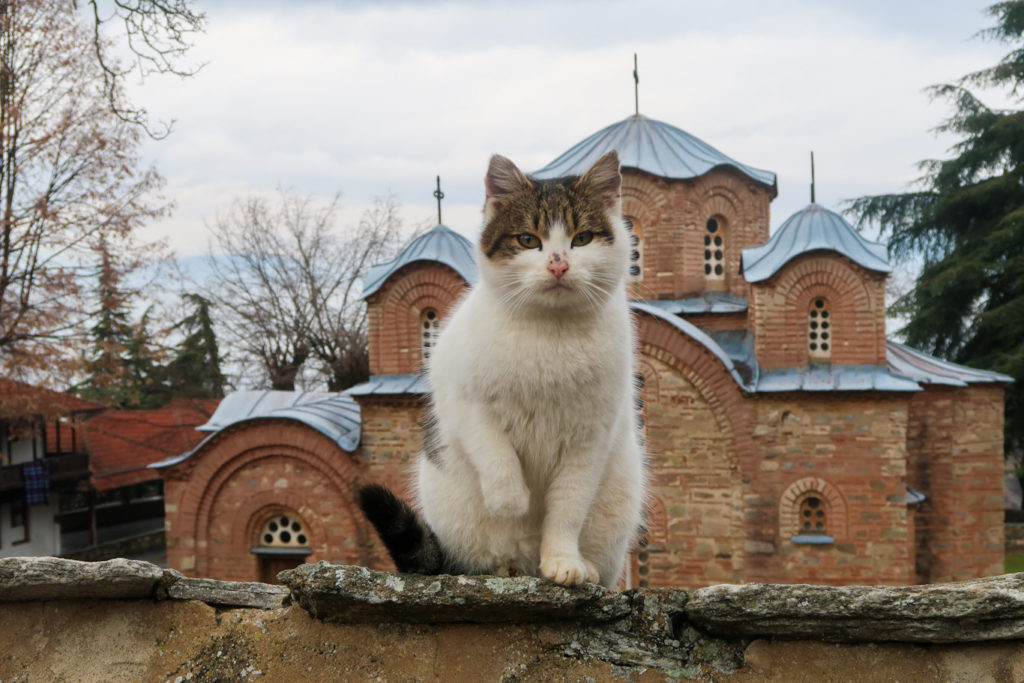 cat in front of st panteleimon church what to do in skopje macedonia
