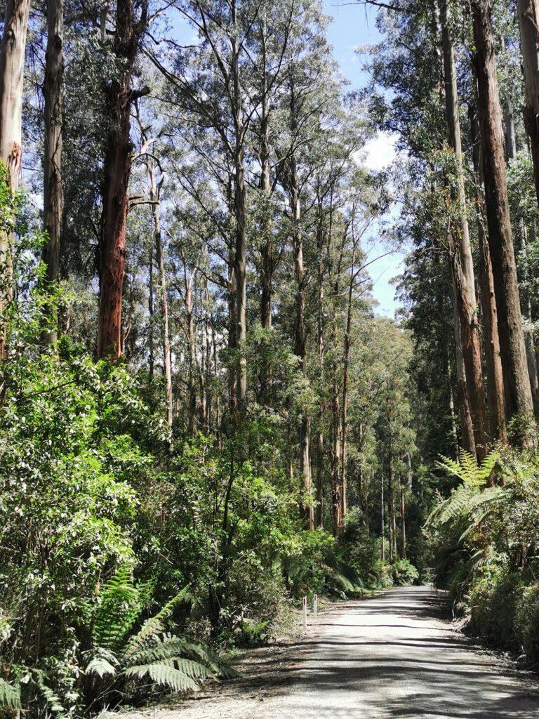 rainforest gallery warburton yarra valley